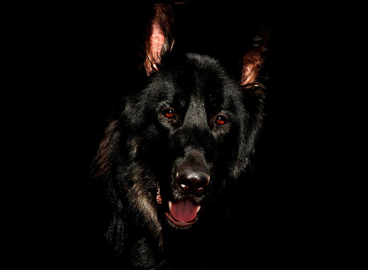 ボス犬のコロと野良犬軍団