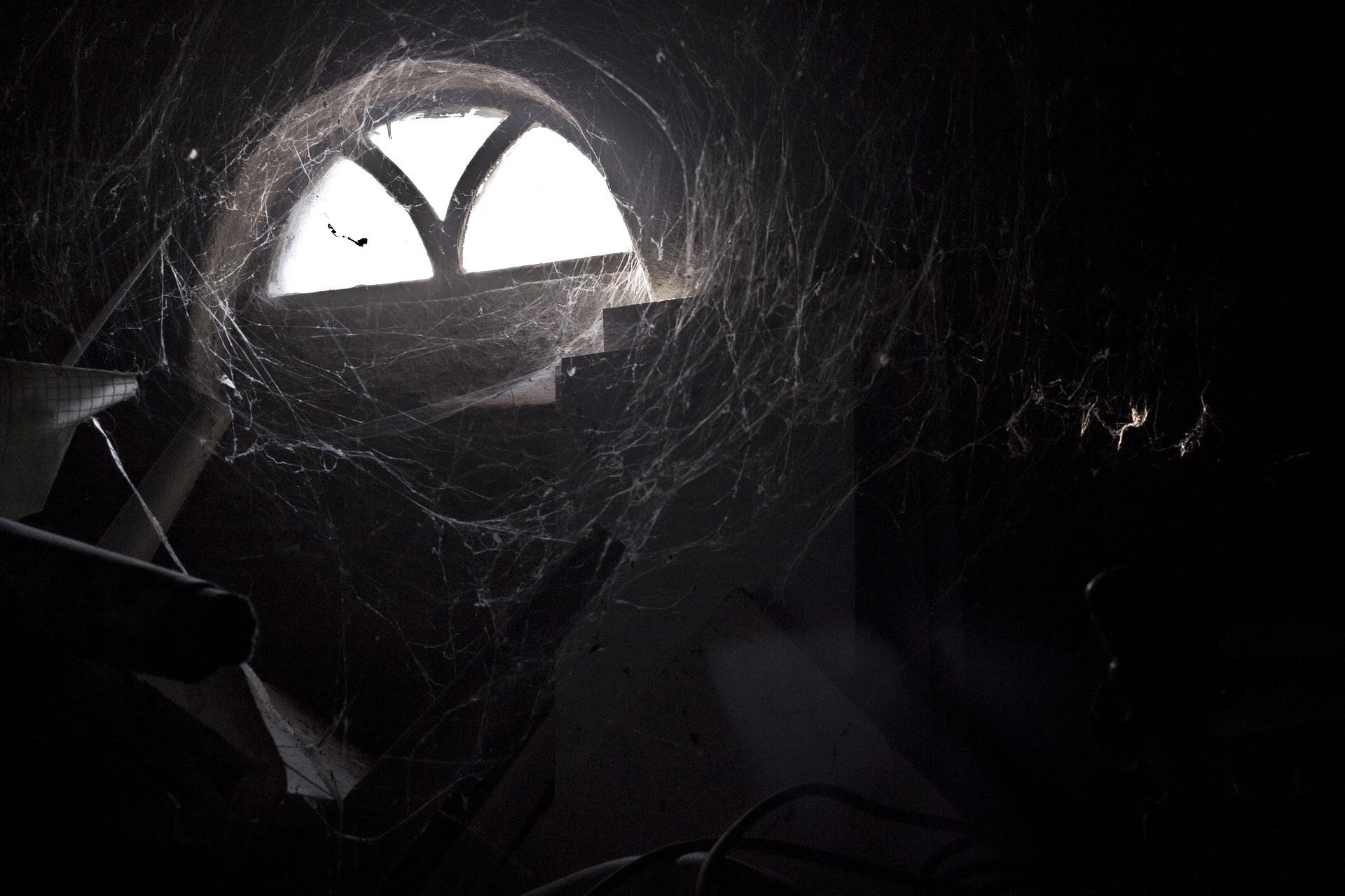 人間サイズの蜘蛛